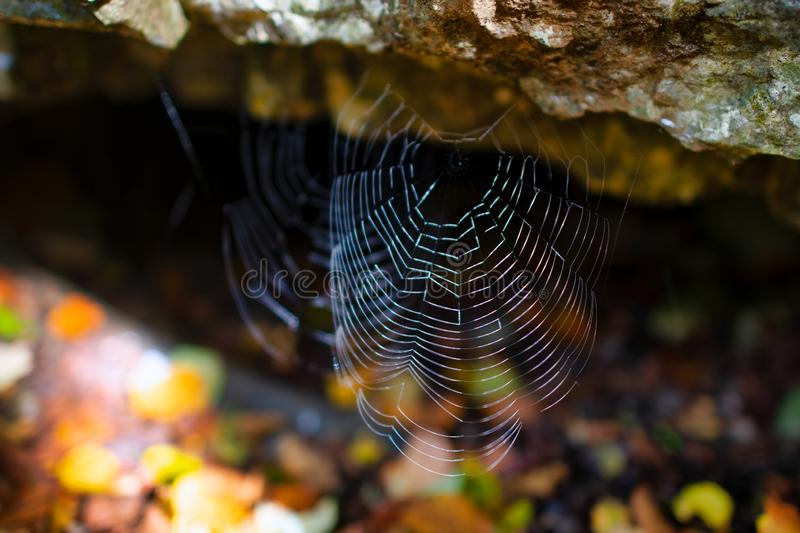 Spider web before a cave in the rock.  royalty free stock photography
