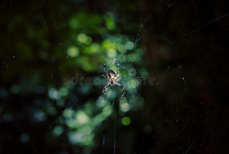 Spider on the web. Close up of spider against blurry background stock images