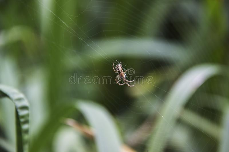 Spider on a web close-up against a nature background.  royalty free stock images