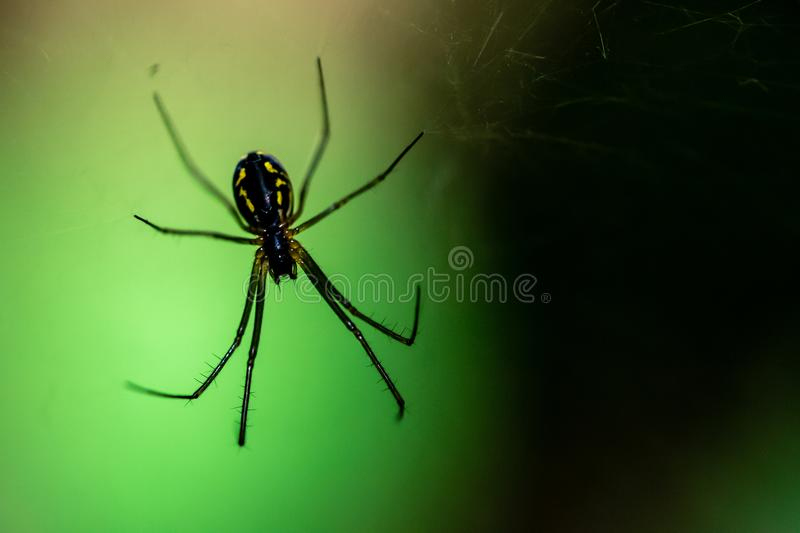 Spider on a web close-up royalty free stock photos