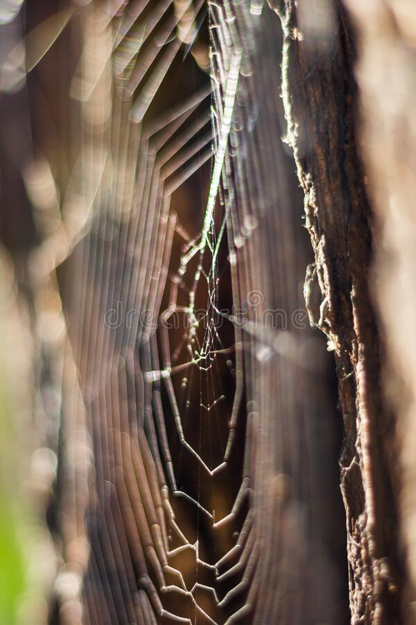 Spider Web Free Public Domain Cc0 Image