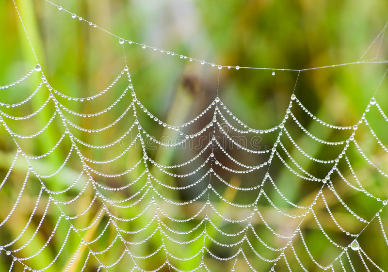 Spider web closeup stock photo