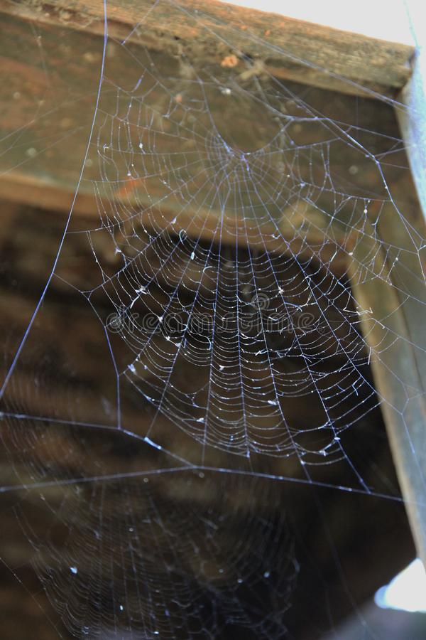 Spider net on an old broken window royalty free stock image