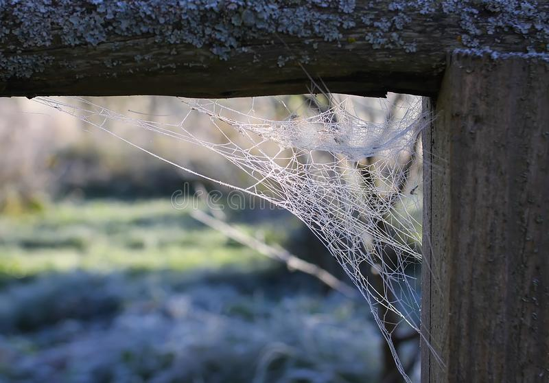 Spider web in the corner of an old wooden window in abandoned building royalty free stock photo
