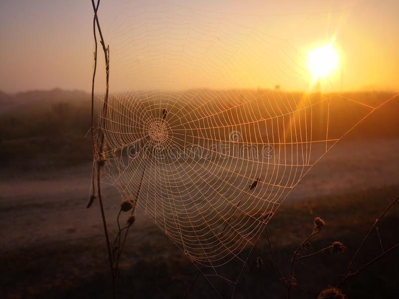 Spider web covered with morning dew and the sunrise stock photo