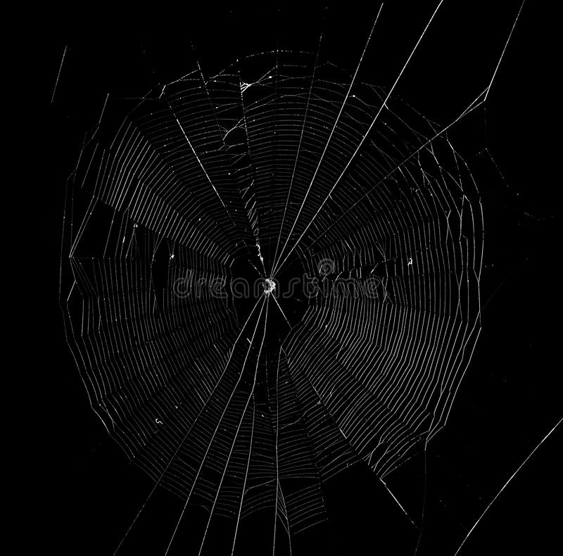 Spider web in the dark background. Spider web in the dark for background stock images