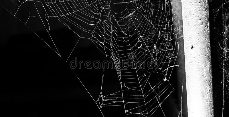 Spider web on a dark background. Web on a dark background, black and white photo royalty free stock photos