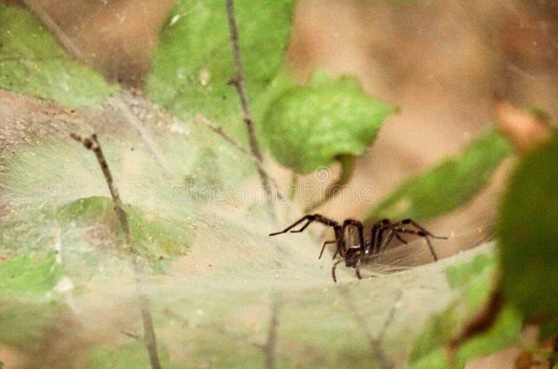 Spider& x27 ; Web de s image libre de droits