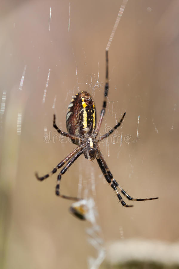 Spider on a web. stock image