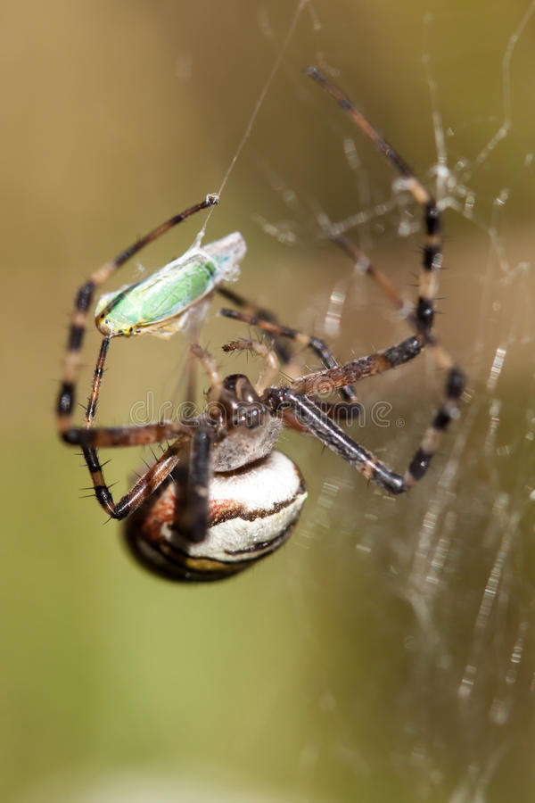 Spider on a web. stock images