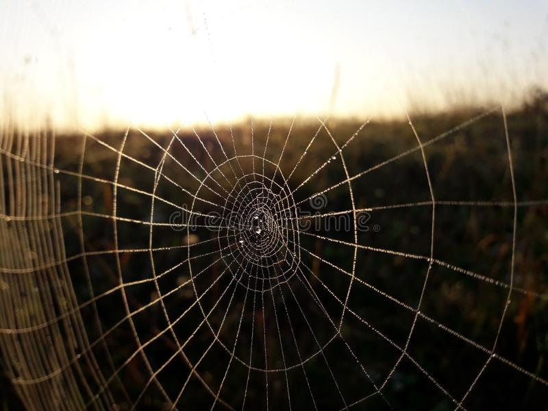 Spider web. And dew blob autumn and fog royalty free stock photos
