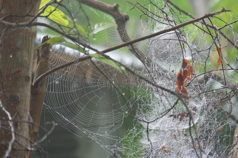 Spider web in dew stock image
