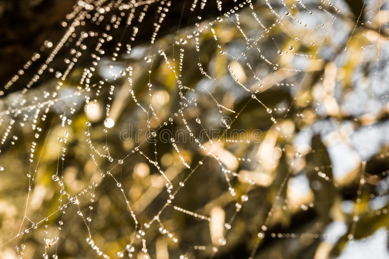 Spider web with dew in the sunshine royalty free stock photos