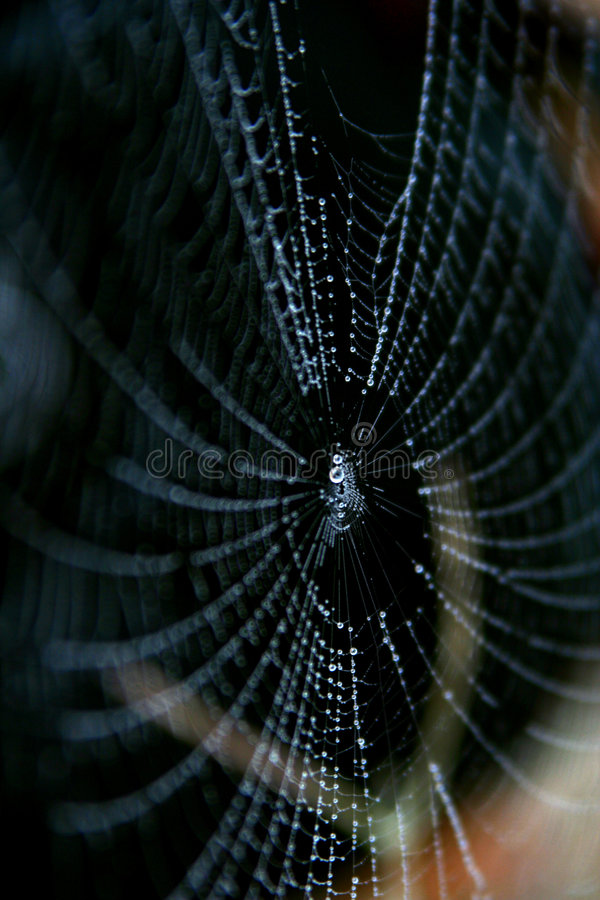 Spider Web And Drop In Morning Royalty Free Stock Photography
