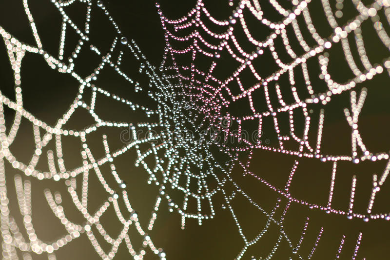 Spider Web With Drops Royalty Free Stock Image