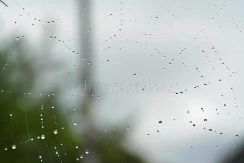 Spider web with drops of water after rain royalty free stock photography