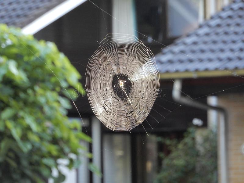 Spider web in early morning covered with dew. The early morning sunlight gave a gold shining royalty free stock photography