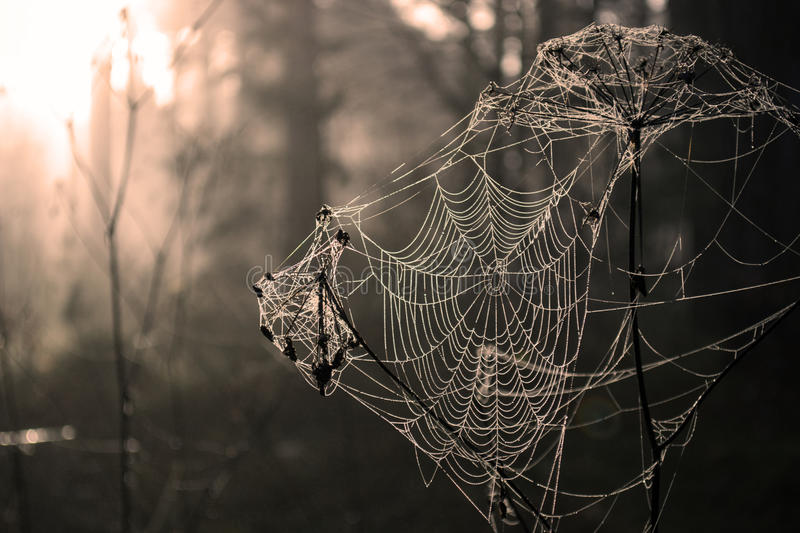 Spider web. The web in the forest stock photos