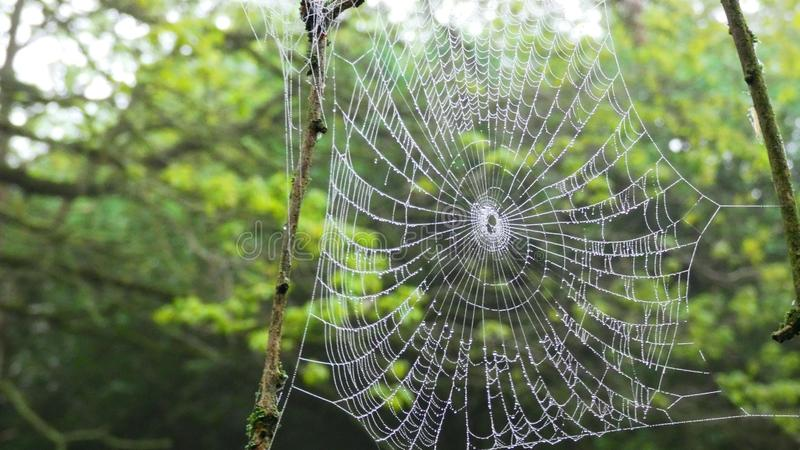 Spider Web in the Forest stock image