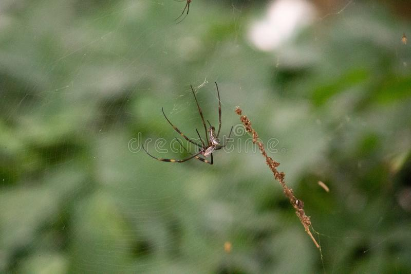 Spider on the web in forest stock image