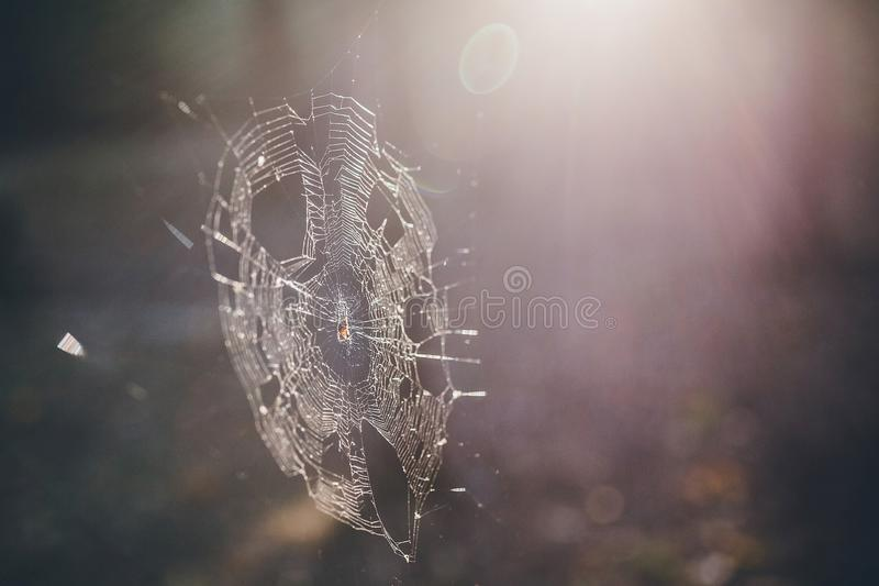 Spider web in the forest royalty free stock photos