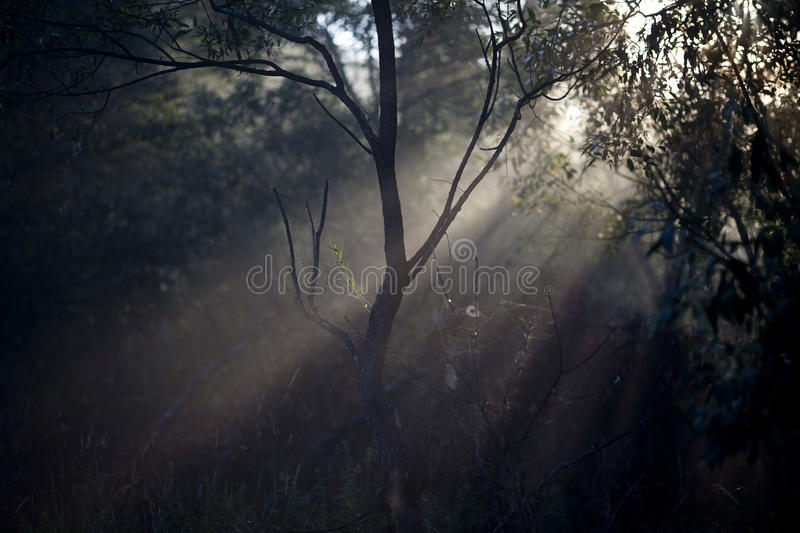 Spider web in the forest royalty free stock images
