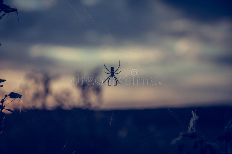 Spider on web in front of sunset sky in summer meadow during dusk with back light in vintage colors with copy space stock photo