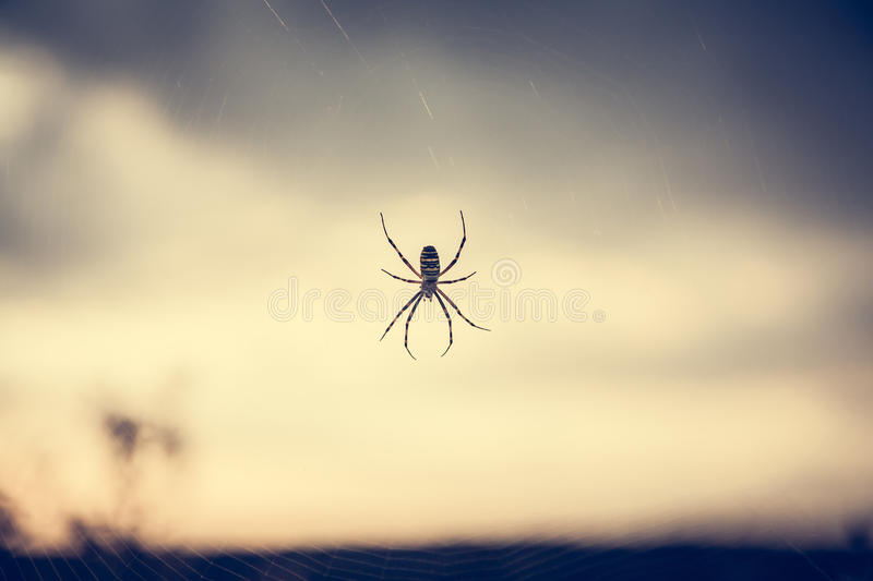 Spider on web in front of sunset sky in summer meadow during sunset with back light in vintage colors with copy space stock images