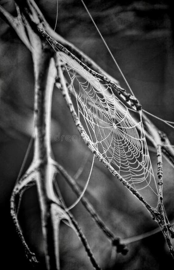 Spider Web Grayscale Photo Free Public Domain Cc0 Image