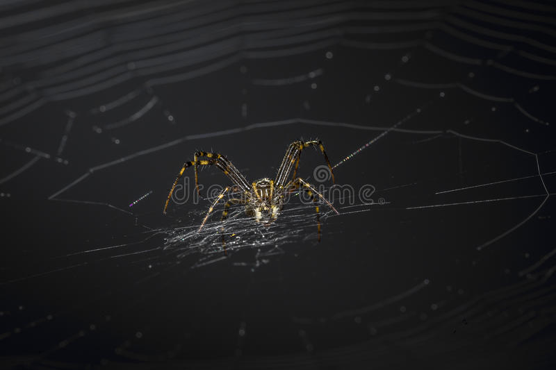 Spider on the web royalty free stock photos