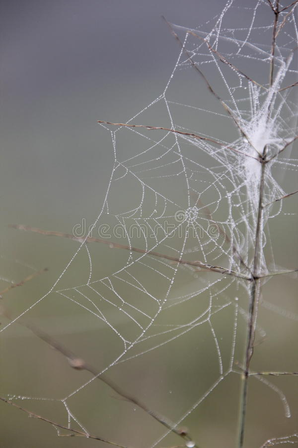 Spider web on in the morning stock images