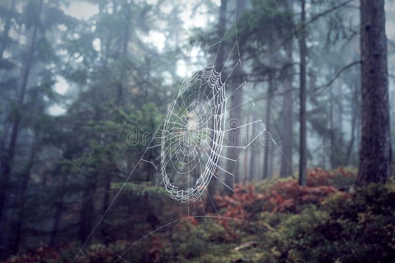 Spider web in foggy forest royalty free stock photography