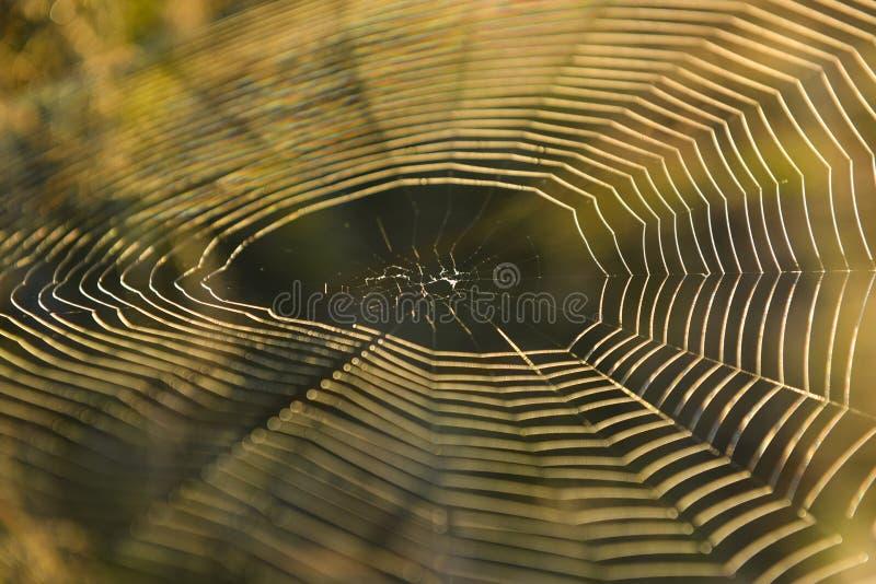 spider web in the morning sun stock photos
