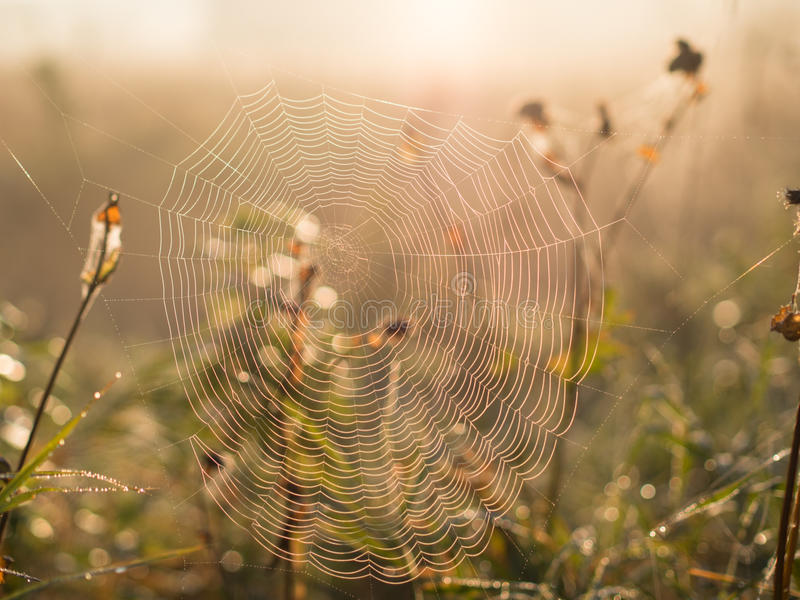 Spider Web in the morning. Spider web with water drops in the morning royalty free stock photo