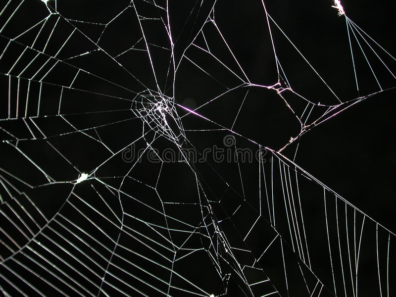 Spider Web at Night Texture stock photos