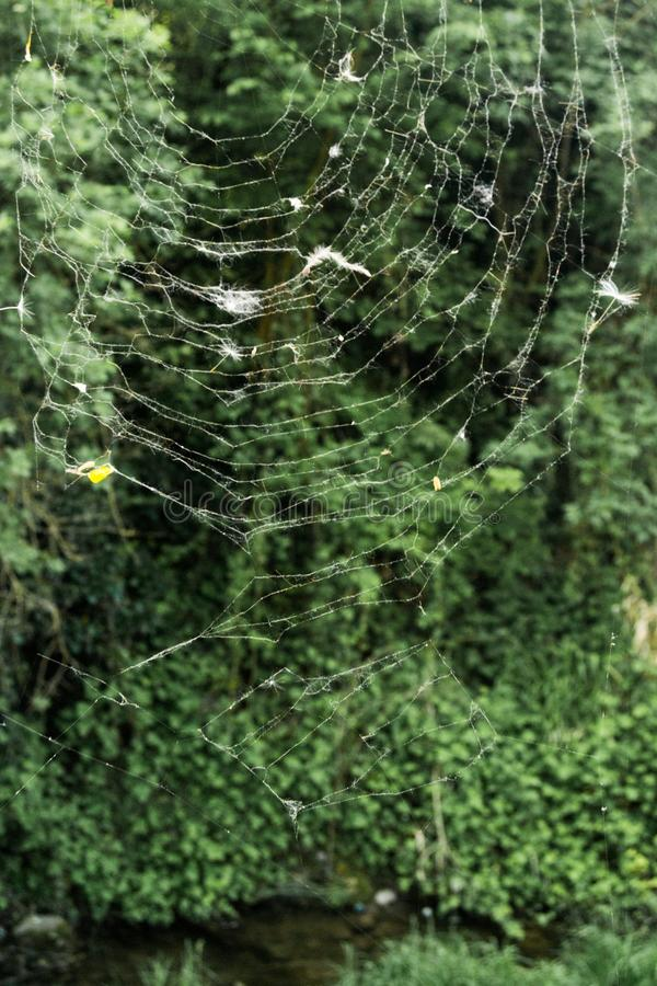 Spider web over the green royalty free stock photos