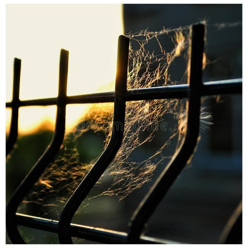 Spider web in front of sunset royalty free stock photos