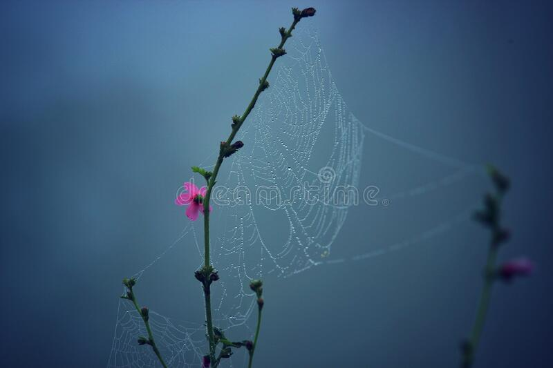 Spider Web On Pink Multi Petaled Flower Free Public Domain Cc0 Image