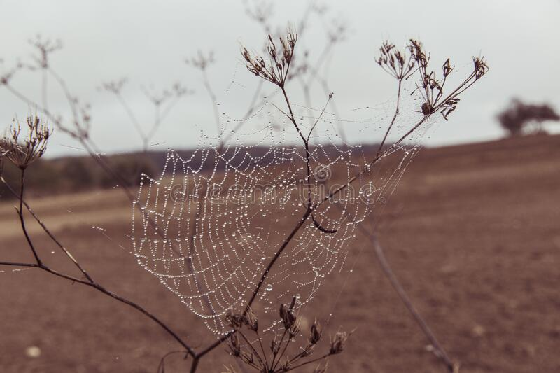 Spider Web On Plant Stem On Dry Land During Daytime Closeup Photography Free Public Domain Cc0 Image