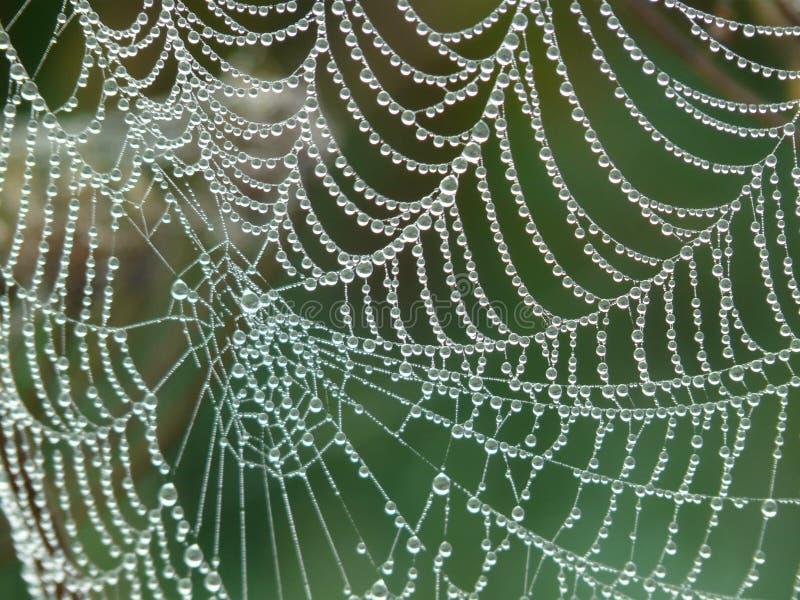 Spider Web With Rain Drops Free Public Domain Cc0 Image