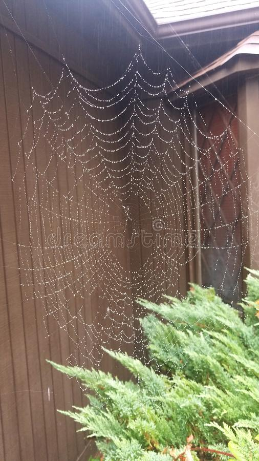 Spider web in rain stock photos
