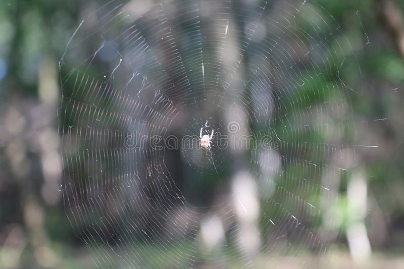 Spider web`s in forest stock image