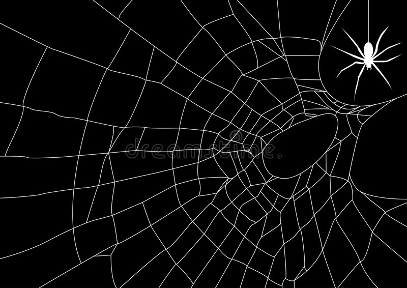 Spider web with spider vector illustration