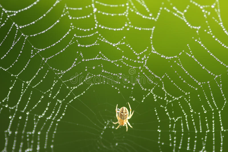 Download Spider Web Stock Photo - Image: 42282169