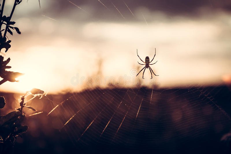 Spider on web in summer meadow during sunset with back light in vintage colors with copy space stock image