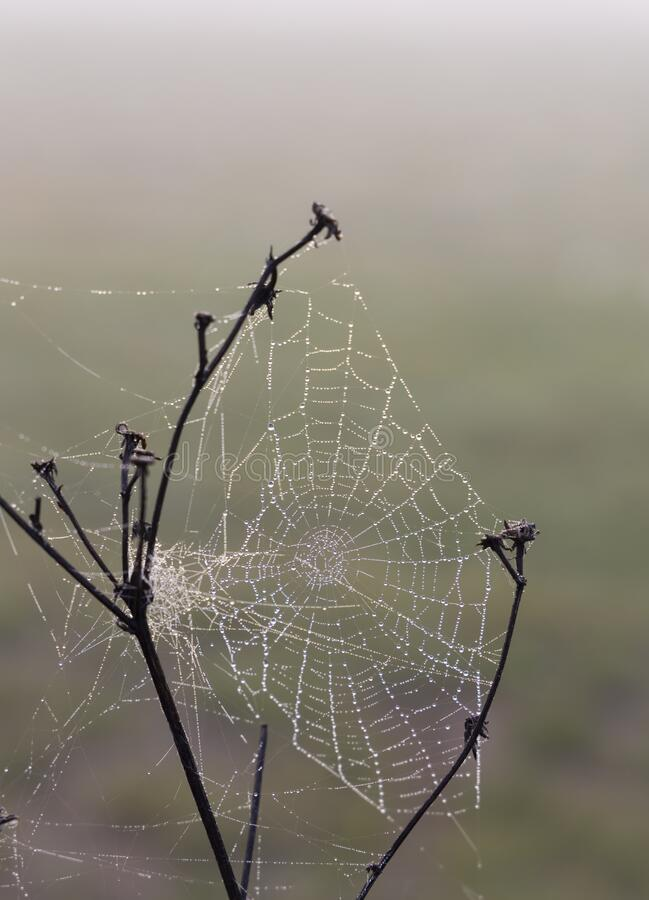 Spider web in sunrise sun stock photos