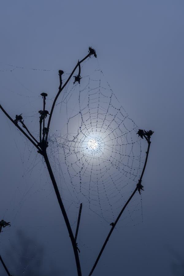 Spider web in sunrise sun stock photography