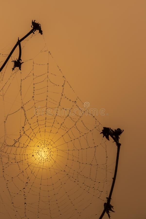 Spider web in sunrise sun royalty free stock images