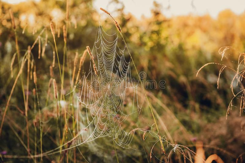 Spider web in the thickets of autumn grass. Field in Sunny autumn day stock image