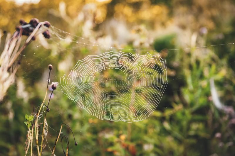 Spider web in the thickets of autumn grass. Field in Sunny autumn day royalty free stock photos